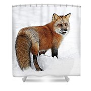 Red Fox Winter Shower Curtain