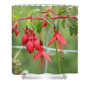 Red Fresia Shower Curtain