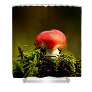Red Fungus Shower Curtain