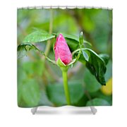Red Garden Rose Bud Shower Curtain