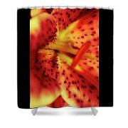 Red Gazer Lily Shower Curtain