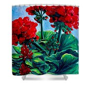 Red Geraniums Shower Curtain