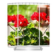 Red Geraniums Triptych Shower Curtain