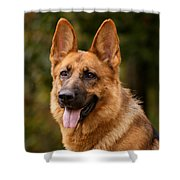 Red German Shepherd Dog Shower Curtain