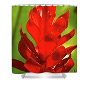 Red Ginger Bud After Rainfall Shower Curtain