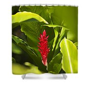Red Ginger Flower Shower Curtain