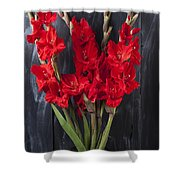 Red Gladiolus In Striped Vase Shower Curtain
