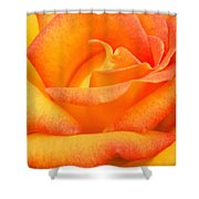 Red Gold Rose Shower Curtain