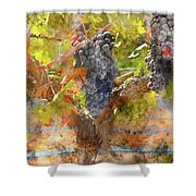 Red Grapes On The Vine During The Fall Season Shower Curtain
