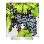 Red Grapes Seasonal Background Shower Curtain