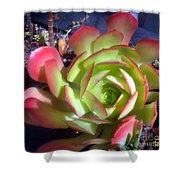 Red Green Succulent Shower Curtain