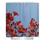 Red Gum Blossoms Australian Flowers Oil Painting Shower Curtain