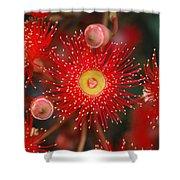 Red Gum Flower Macro Shower Curtain