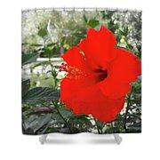 Red Gumamela  Shower Curtain