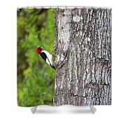 Red Head Bird Shower Curtain