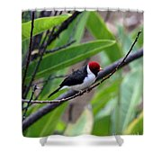 Red Head Shower Curtain