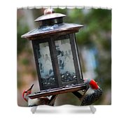 Red Head Wood Peckers On Feeder Shower Curtain