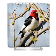 Red-headed Woodpecker At A Glace  Shower Curtain