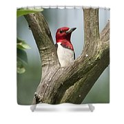 Red-headed Woodpecker Shower Curtain