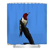 Red Headed Woodpecker On A Snag Shower Curtain
