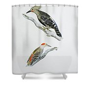 Red Headed Woodpeckers 3 Shower Curtain