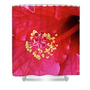 Red Hibiscus 3 Shower Curtain