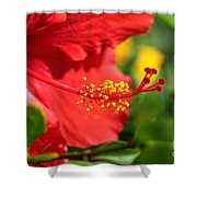 Red Hibiscus And Green Shower Curtain