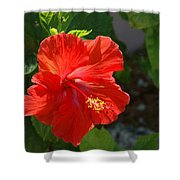 Red Hibiscus II Shower Curtain