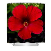 Red Hibiscus - Kauai Shower Curtain