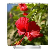 Red Hibiscus Shower Curtain