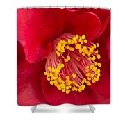 Red Camellia Shower Curtain