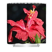 Red Hibiscus Square 2 Shower Curtain