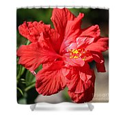 Red Hibiscus Square Shower Curtain