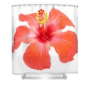 Red Hibiscus Vector Isolated Shower Curtain