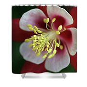 Red Hobbit Columbine 2 Shower Curtain