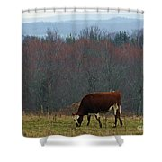Red Holstein Of The Hills Shower Curtain