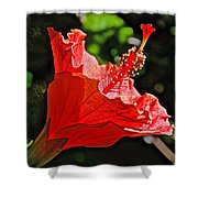 Red Hyacinth At Pilgrim Place In Claremont-california Shower Curtain