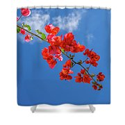 Red In The Sky Shower Curtain
