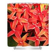Red Indian Flowers Like Sunshine - Macro Photography Shower Curtain