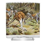 Red Kangaroo Shower Curtain