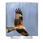 Red Kite Flying Shower Curtain