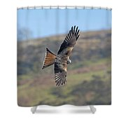Red Kite Shower Curtain