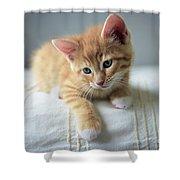Red Kitten On A Beige Blanket Shower Curtain