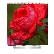 Red Knockout Rose Shower Curtain by Robert L Jackson