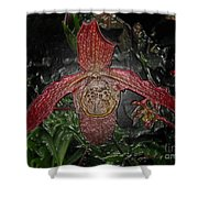 Red Lady Slipper Shower Curtain