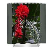 Red Lava Flower Shower Curtain