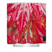Red Leaf Abstract Shower Curtain