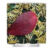 Red Leaf On  Arborvitae Leaves Shower Curtain