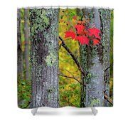 Red Leaves Shower Curtain by Gary Lengyel