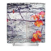 Red Leaves Growing By The Wall. Autumn Shower Curtain